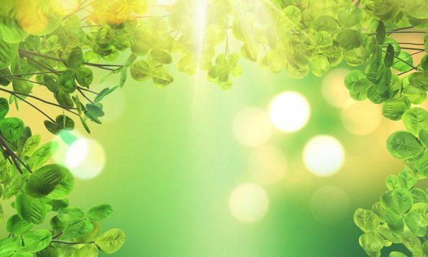 Sparkling Sunshine | Natalie Harvey