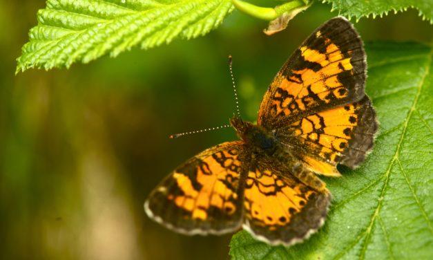 Gutter Butterfly | Liz Homes